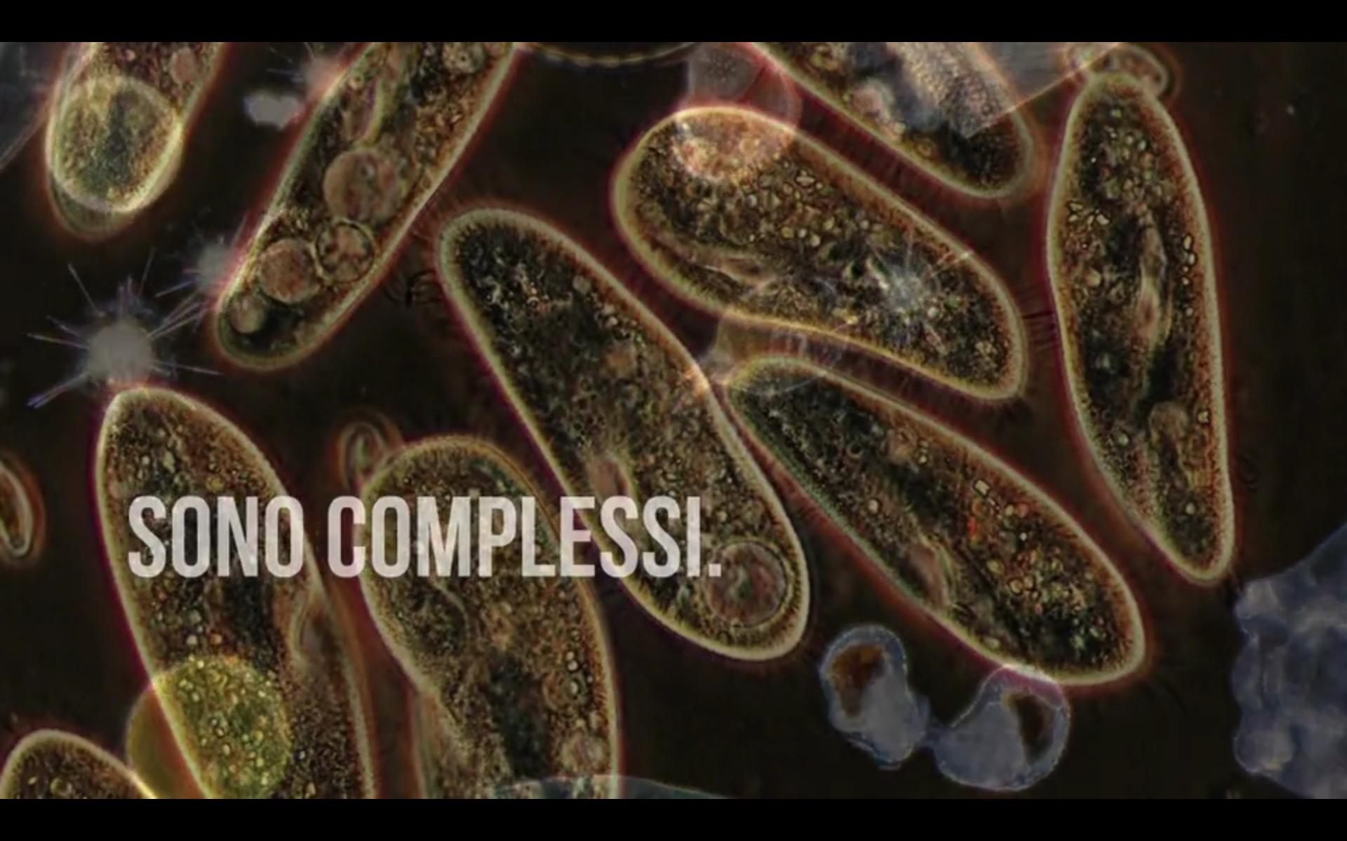 Festival della Complessità – Trailer 2018